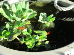 Water Pot 05